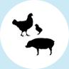 Intensieve veehouderij